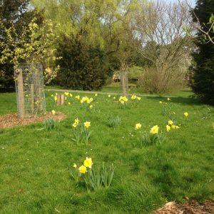 Windsford Gardens 2